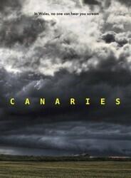Канарейки / Canaries