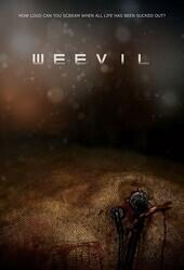 Долгоносик / Weevil