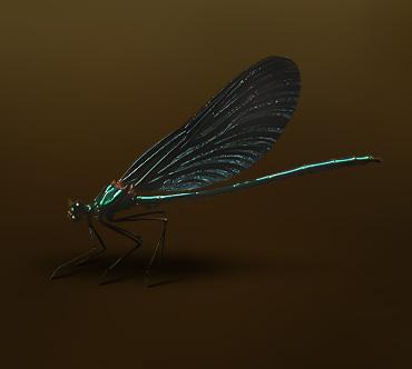 Жесткий секс девок. Лат Calopteryx virgo Класс Насекомые Длина До